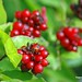 What kind of berries are these by WISEBUYS21