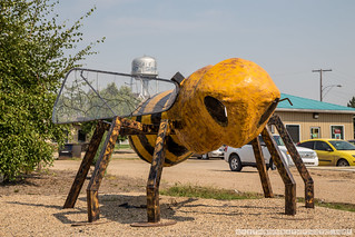 World's Second Largest Honey Bee