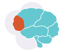 early childhood brain development essay A child's brain undergoes an amazing period of development from birth to three—producing more than a  infant and early childhood mental  brain development.
