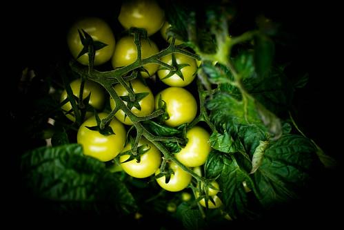 Green tomatoes...