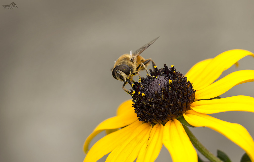 Enjoying pollen