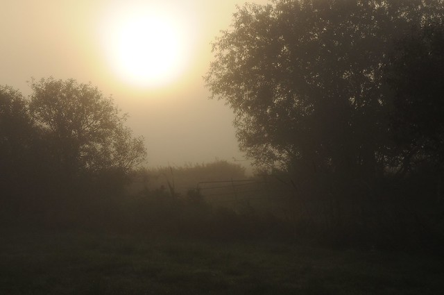Ein nebeliger Oktober-Morgen in Stapelholm; Bergenhusen (11)