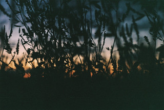 Sunset through grass, at Paljassaare