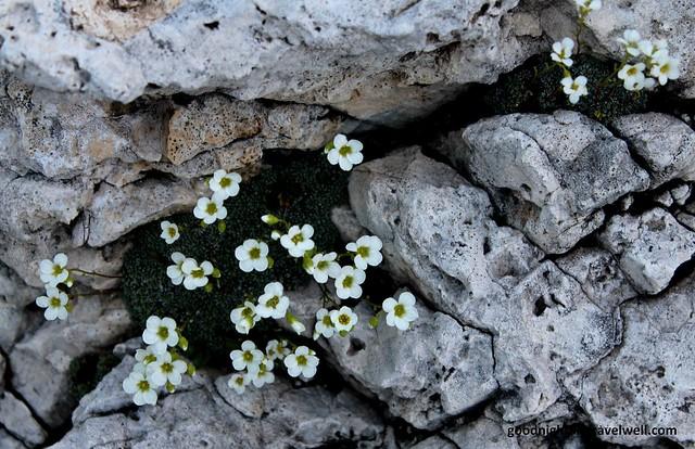 dolomiti mulaz e fiori