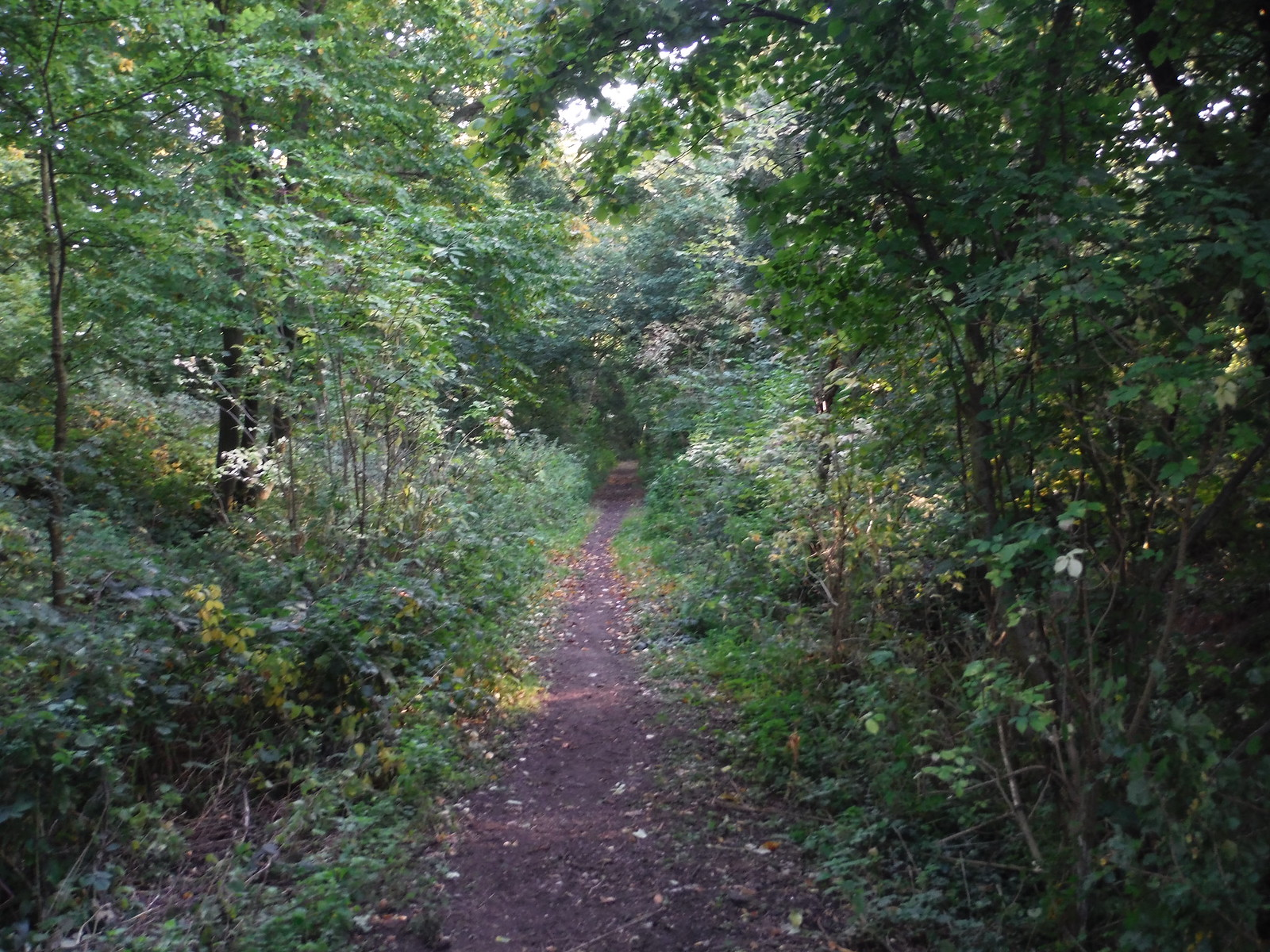 Path through Hawe's Wood SWC Walk 159 South Woodham Ferrers to North Fambridge