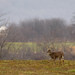 7 point Whitetail by snooker2009