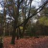 Herbst im Nationalpark. #veluwe #autumn #treelove