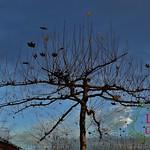 Gartenharmonie (120)