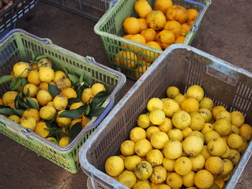 harvesting-citron-at-musashino-4
