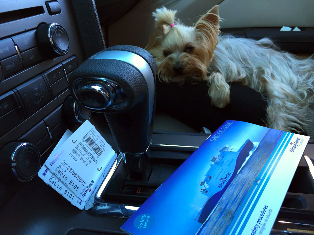 Viajar con mascotas a Reino Unido: Pau antes de embarcar con destino a Inglaterra viajar con mascotas a reino unido - 23576944451 824897498c b - Viajar con mascotas a Reino Unido desde España