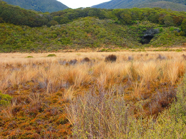 Gouland Downs - Heaphy Track