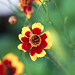Red & Yellow by umar_ali33@ymail.com