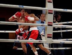 striking combat sports, boxing ring, professional boxing, sport venue, individual sports, contact sport, sports, combat sport, muay thai, shoot boxing, kickboxing, sanshou, boxing,