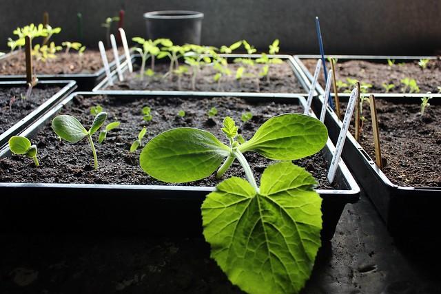 How to raise seedlings  Seedlings