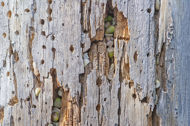 Treehousestach 20d_2592