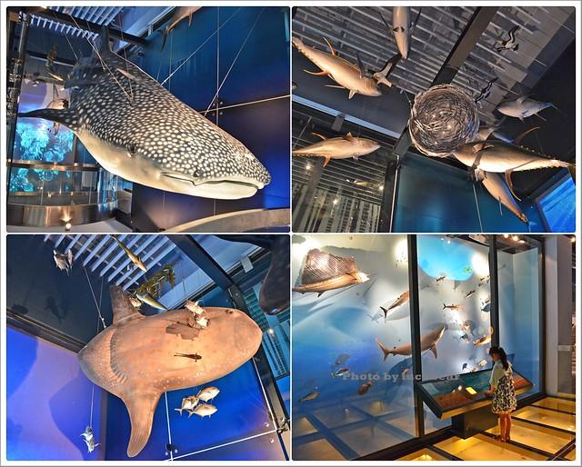 基隆國立海洋科技博物館009-DSC_7352