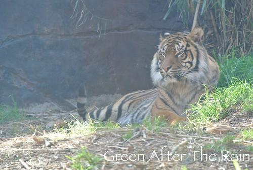 150909d Taronga Zoo _084
