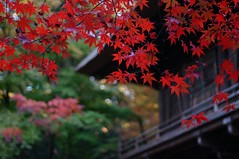 Pure Red in Heirinji Zen Temple