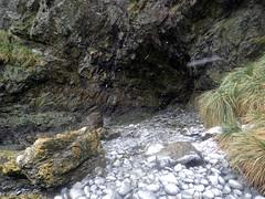 Cave Cove