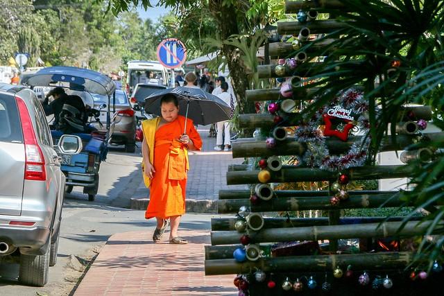 A young buddhist monk and bamboo Christmas tree, Luang Prabang, laos ルアンパバーン、少年僧とクリスマスツリー
