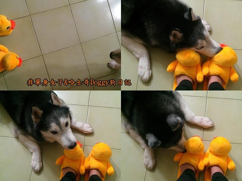 doggy黃色小鴨鞋09