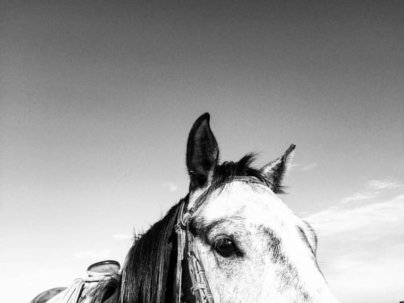 The pretty Moose. #love #ig_equine #igers #horse #horses #instagood #blackandwhite #photography #iphone6 #iphonography #horsesofinstagram #equine #art #MyStory #thedxranch #theviewfromhere