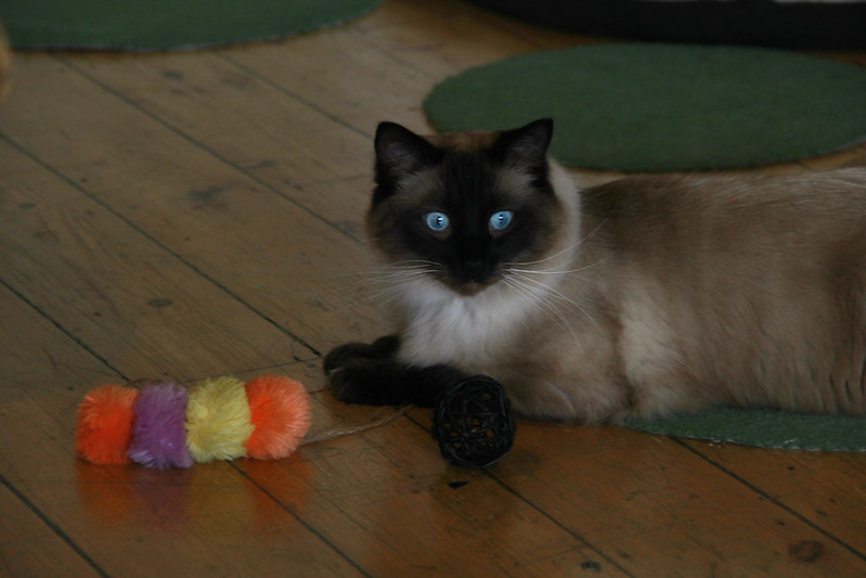 Old Blue Eyes, Catpawcino, Newcastle