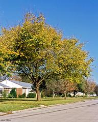 Fall Colors, North Richland Hills
