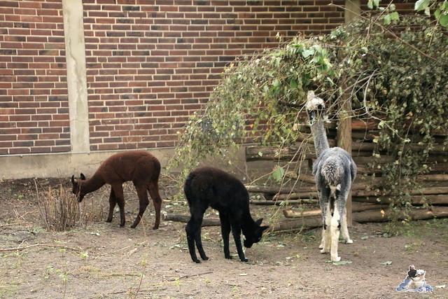 Zoo Berlin 18.09.2015   0107