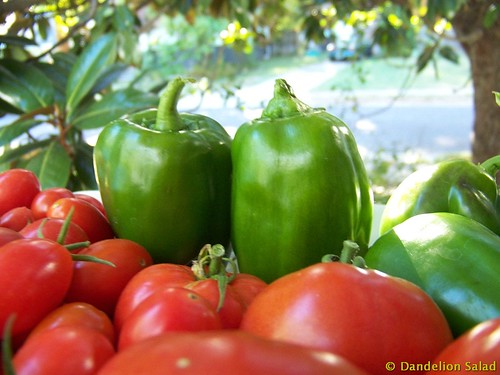 Harvest: Green Peppers and Tomatoes