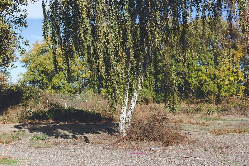 Kisiel-2015-10-18-161