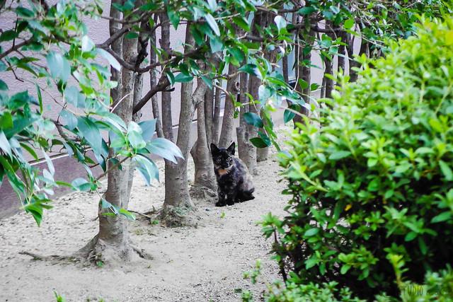 Today's Cat@2015-10-22