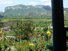 Vinales - Flower Farm
