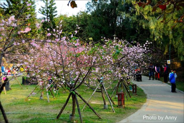 麗池櫻花25
