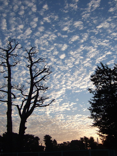 sky japan sunrise geotagged tokyo finepixf10 mackerelsky kugayama geo:lat=356846131 geo:lon=1396018689