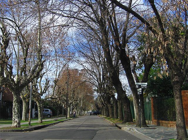 El oto o en una de las calles m s arboladas de ciudad for Alquileres en ciudad jardin el palomar
