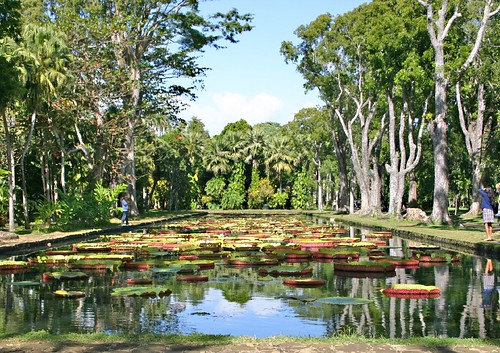 Giant lilies at the Pamplemousses Botanical Garden. Photo via: http://www.flickr.com/photos/plassen/ CC by SA
