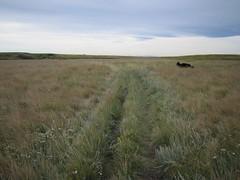 prairie, land lot, steppe, ecoregion, field, ranch, grass, shrubland, plain, natural environment, meadow, wilderness, pasture, rural area, grassland, wildlife,