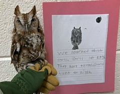 Owl at Hubbard Elementary