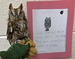 Owl at Hubbard Elementary