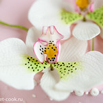 Орхидея фаленопсис или свадебная орхидея