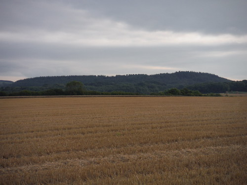 High Wood, from near end of walk