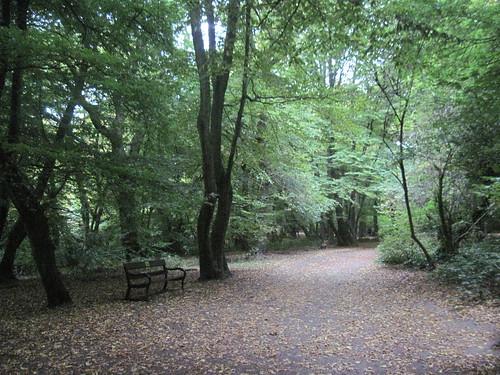 Highgate Wood Morning