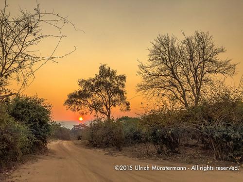 africa travel sunset sun holiday nature vakantie zonsondergang bush technology sonnenuntergang natur pflanzen natuur safari afrika za ferien planten zambia reise reizen zm lowerzambezinationalpark iphone6 lusakaprovince 150900zambia