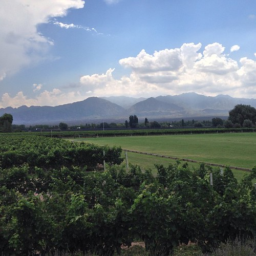 Hello mountains. Hello vines. Hello polo field.