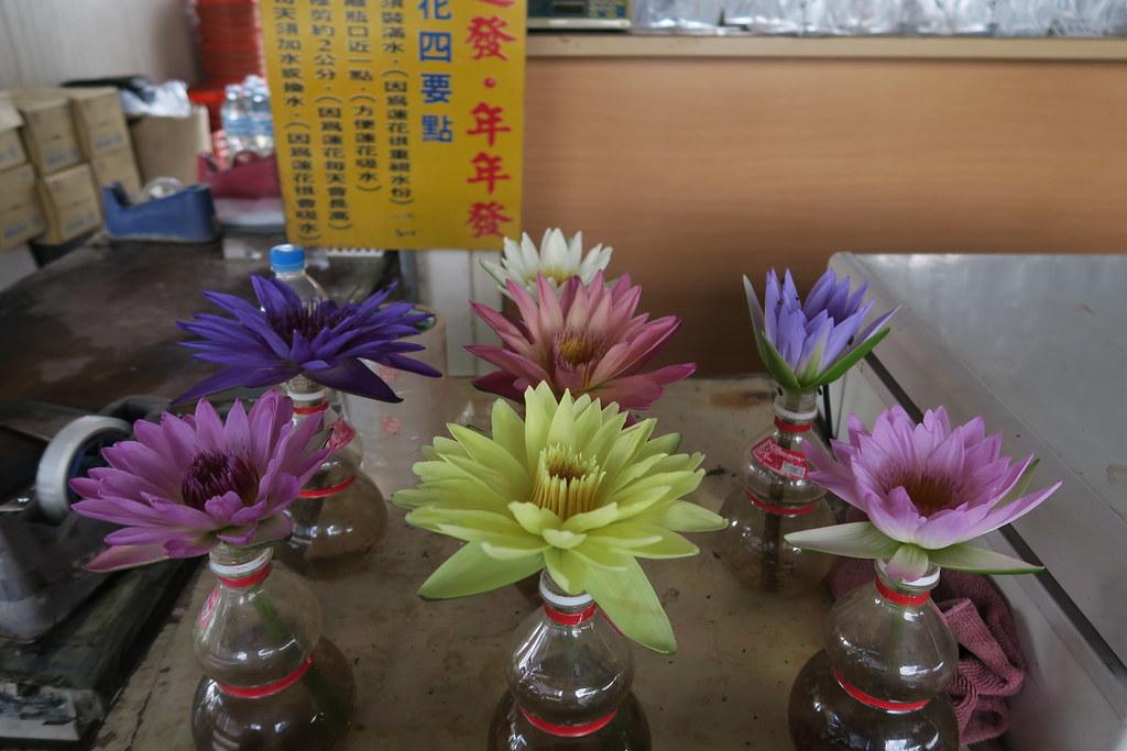 台南市白河區蓮緣香水蓮花園 (16)
