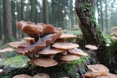 1. November 2015 - 16:46 - Pilze im Wald (Nahaufnahme)