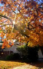 多色之秋 Autumn