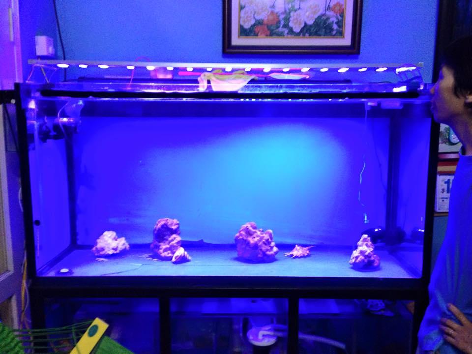 Đèn Led Bể Cá Cảnh - 43