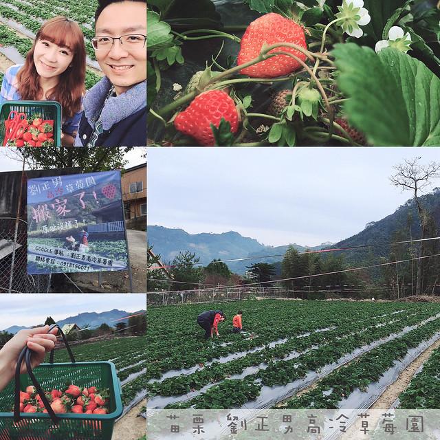 劉正男高冷草莓園 (1)